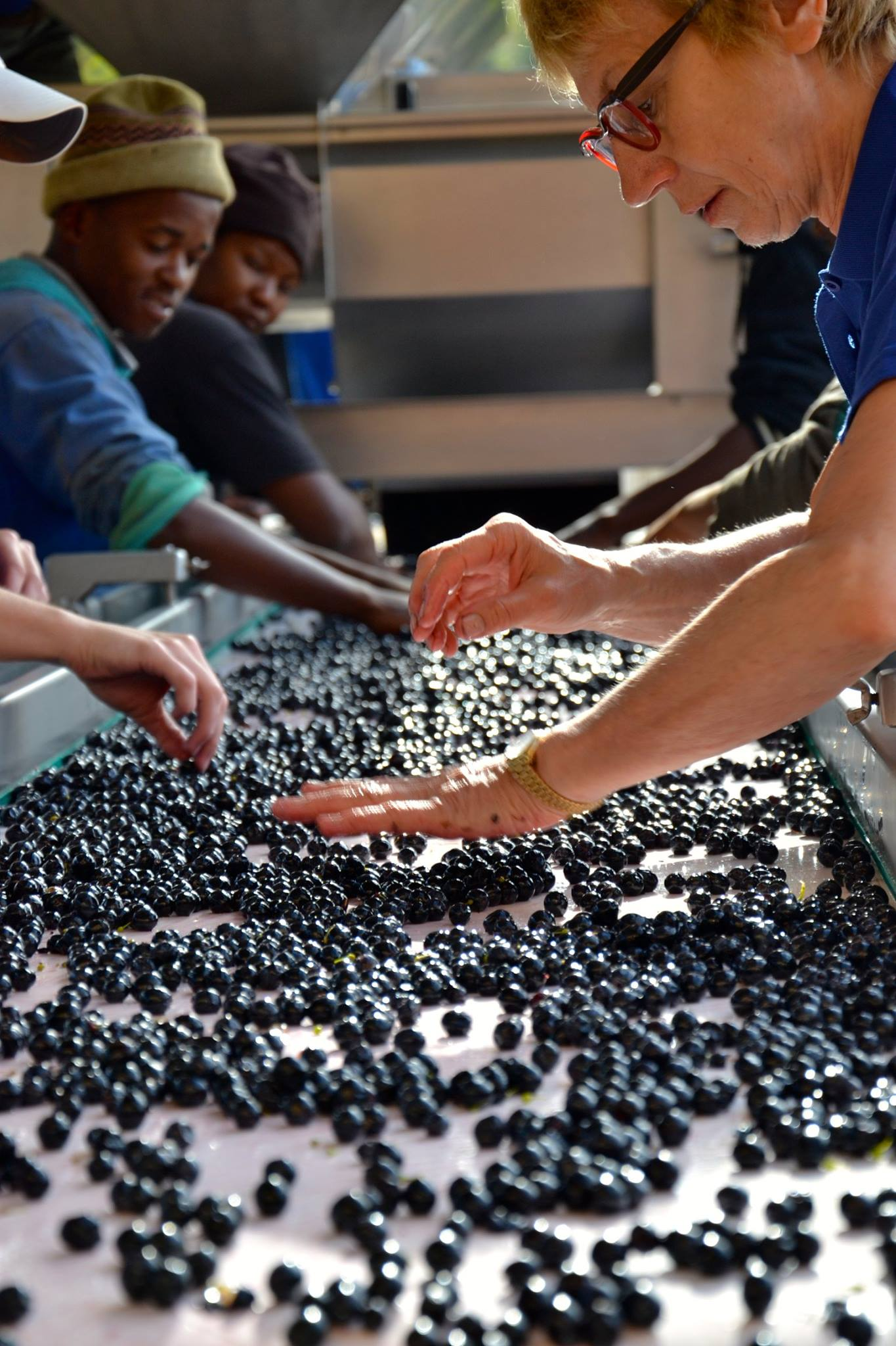 Sorting grapes 3